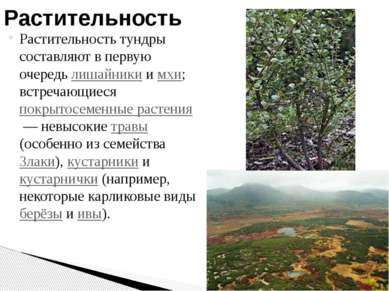 Растительность тундры составляют в первую очередь лишайники и мхи; встречающи...