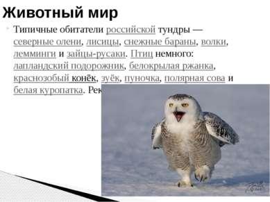 Типичные обитатели российской тундры— северные олени, лисицы, снежные бараны...
