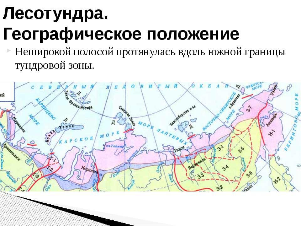 Неширокой полосой протянулась вдоль южной границы тундровой зоны. Лесотундра....