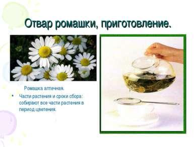 Отвар ромашки, приготовление. Ромашка аптечная. Части растения и сроки сбора:...