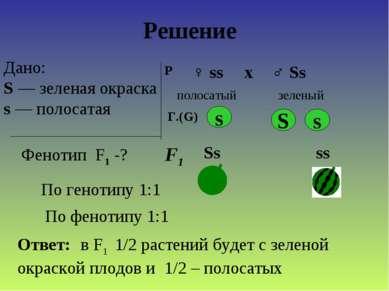 Дано: S — зеленая окраска s — полосатая Фенотип F1 -? Р ♀ ss ♂ Ss х полосатый...