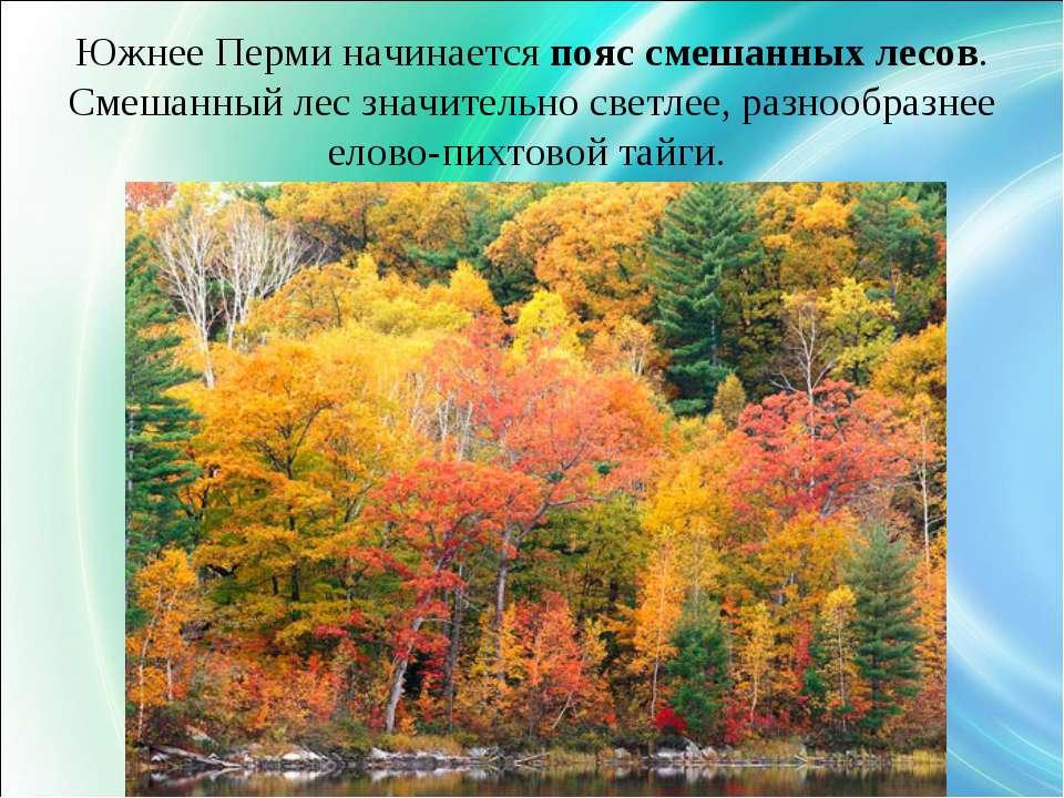 Южнее Перми начинается пояс смешанных лесов. Смешанный лес значительно светле...