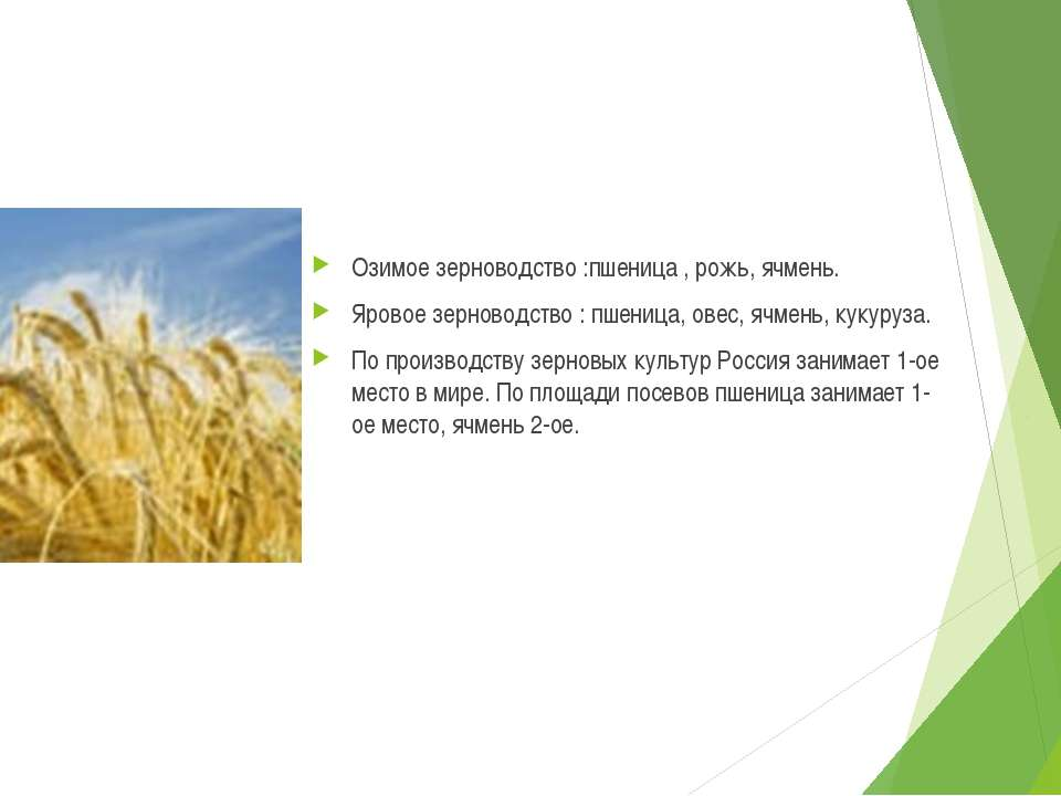 Озимое зерноводство :пшеница , рожь, ячмень. Яровое зерноводство : пшеница, о...