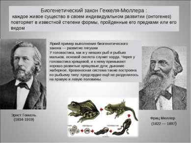 Биогенетический закон Геккеля-Мюллера : каждое живое существо в своем индивид...