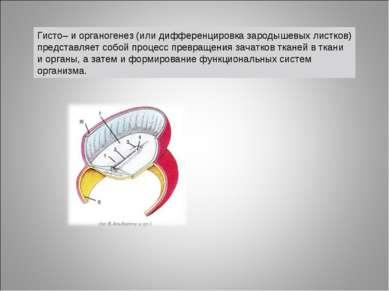 Гисто– и органогенез (или дифференцировка зародышевых листков) представляет с...