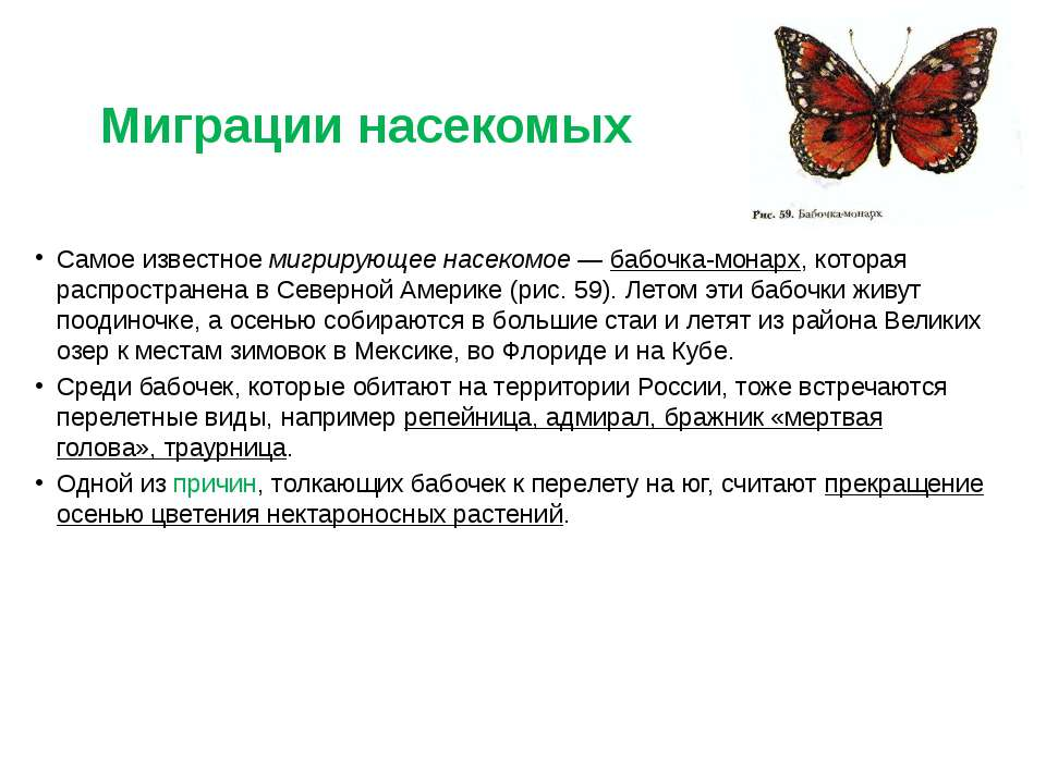 Миграции насекомых Самое известное мигрирующее насекомое — бабочка-монарх, ко...