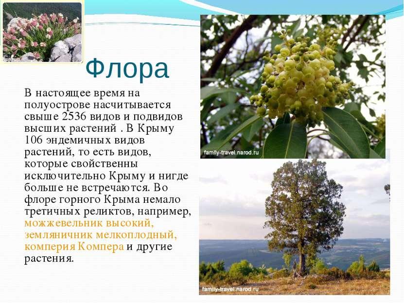 Флора В настоящее время на полуострове насчитывается свыше 2536 видов и подви...