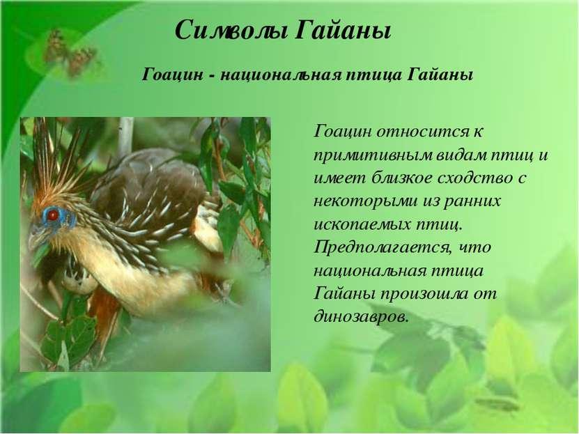 Символы Гайаны Гоацин относится к примитивным видам птиц и имеет близкое сход...
