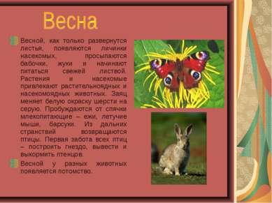 Весной, как только развернутся листья, появляются личинки насекомых, просыпаю...