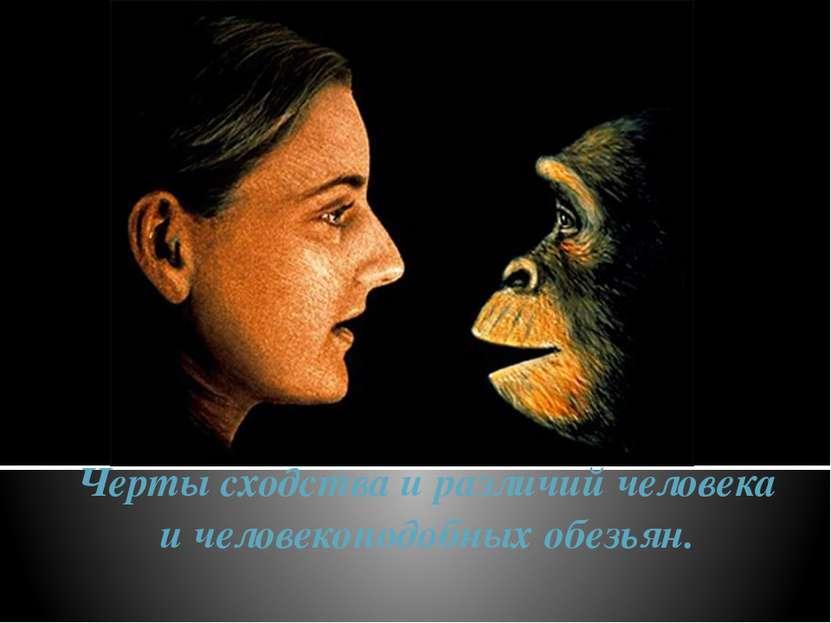 Черты сходства и различий человека и человекоподобных обезьян.