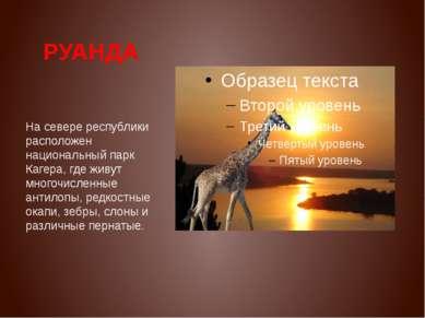 РУАНДА На севере республики расположен национальный парк Кагера, где живут мн...