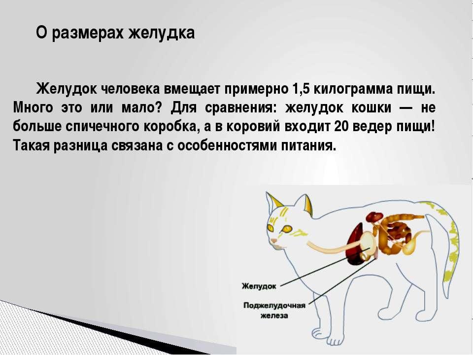 О размерах желудка Желудок человека вмещает примерно 1,5 килограмма пищи. Мно...