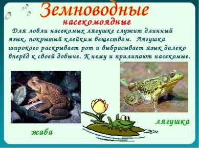 насекомоядные Для ловли насекомых лягушке служит длинный язык, покрытый клейк...