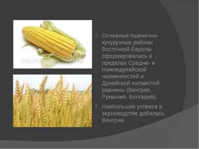 Основные пшенично-кукурузные районы Восточной Европы сформировались в предела...