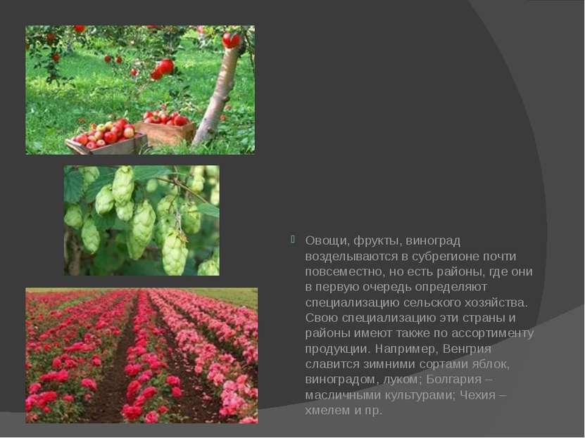 Овощи, фрукты, виноград возделываются в субрегионе почти повсеместно, но есть...