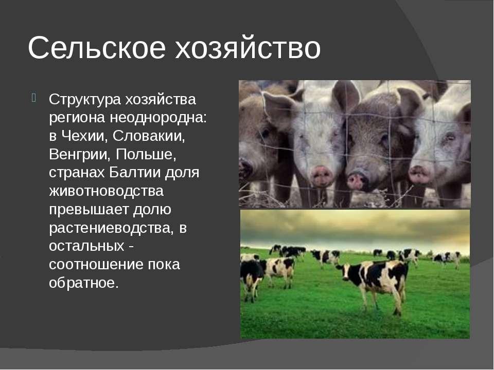 Сельское хозяйство Структура хозяйства региона неоднородна: в Чехии, Словакии...