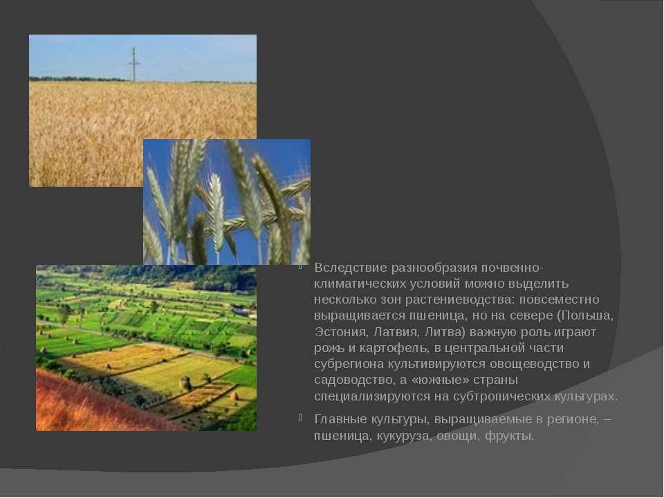 Вследствие разнообразия почвенно-климатических условий можно выделить несколь...