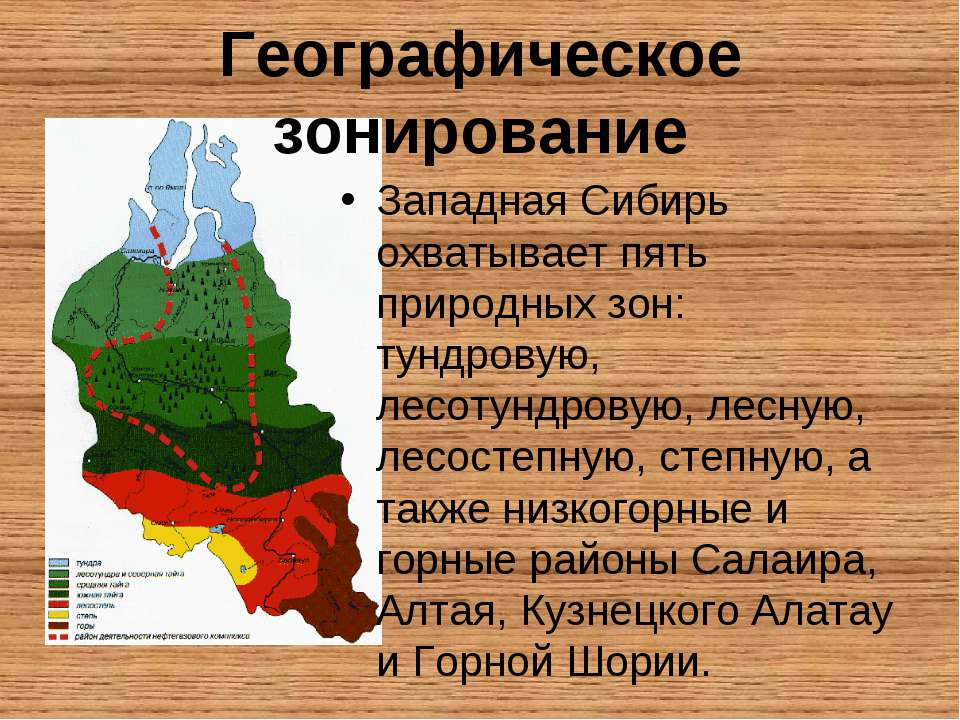Географическое зонирование Западная Сибирь охватывает пять природных зон: тун...