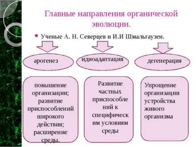Главные направления органической эволюции. Ученые А. Н. Северцев и И.И Шмальг...