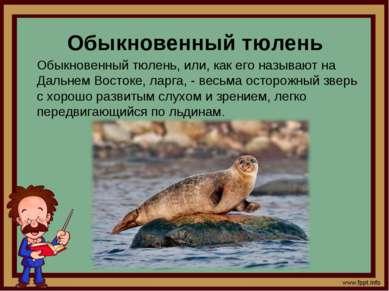 Обыкновенный тюлень Обыкновенный тюлень, или, как его называют на Дальнем Вос...