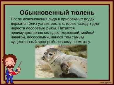 Обыкновенный тюлень После исчезновения льда в прибрежных водах держится близ ...