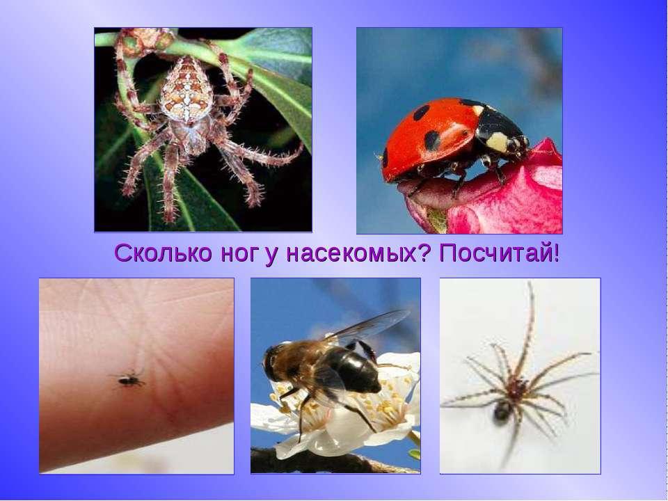 Сколько ног у насекомых? Посчитай!