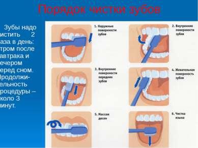 Порядок чистки зубов Зубы надо чистить 2 раза в день: утром после завтрака и ...