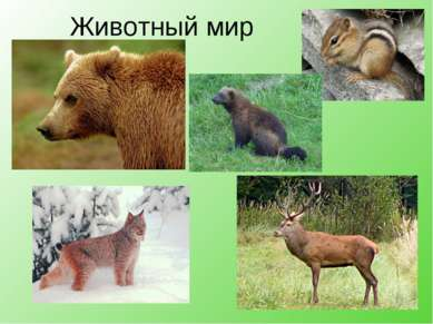 Животный мир