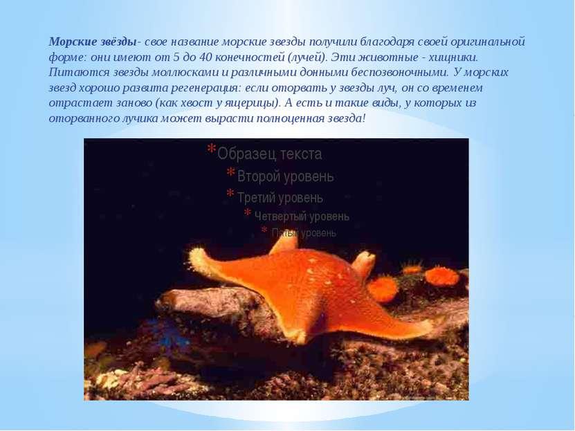 Морские звёзды- свое название морские звезды получили благодаря своей оригина...