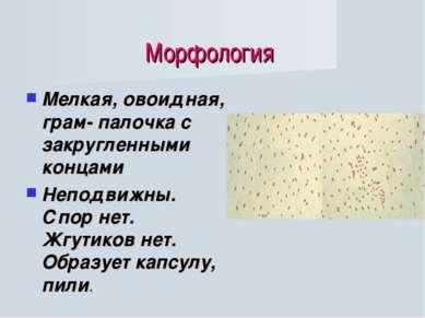 Морфология Мелкая, овоидная, грам- палочка с закругленными концами Неподвижны...