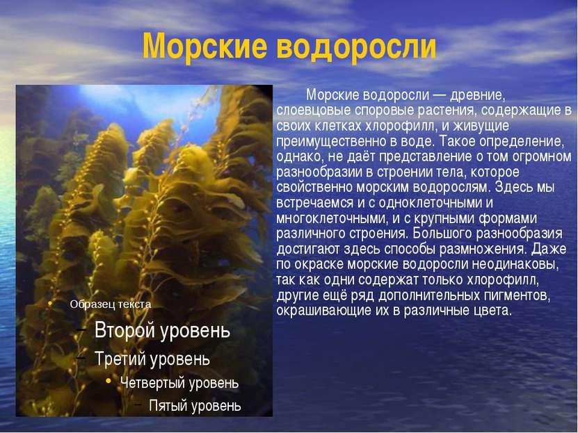 Морские водоросли Морские водоросли — древние, слоевцовые споровые растения, ...