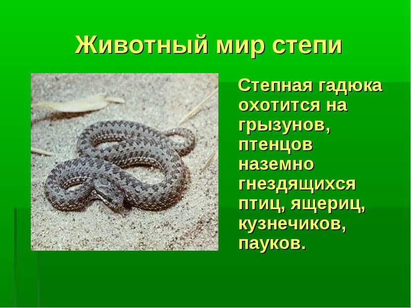 Животный мир степи Степная гадюка охотится на грызунов, птенцов наземно гнезд...