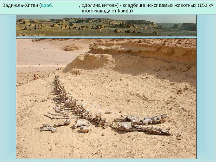 Вади-аль-Хитан (араб. وادي الحيتان , «Долина китов»)- кладбище ископаемых жи...