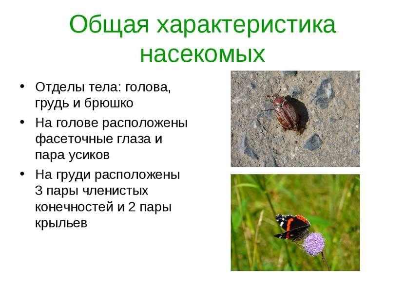 Общая характеристика насекомых Отделы тела: голова, грудь и брюшко На голове ...