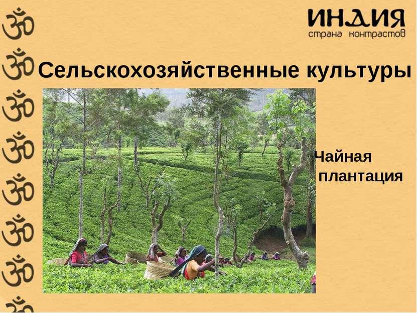 Сельскохозяйственные культуры Чайная плантация
