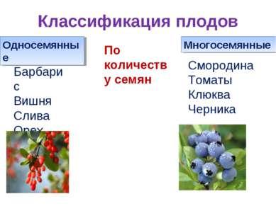 Классификация плодов Односемянные Многосемянные По количеству семян Барбарис ...