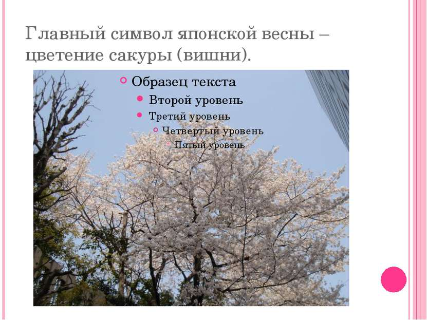 Главный символ японской весны – цветение сакуры (вишни).