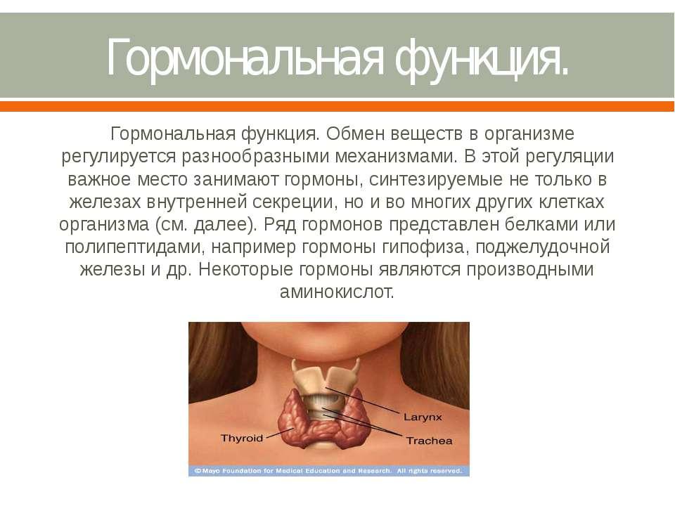Гормональная функция. Гормональная функция. Обмен веществ в организме регулир...
