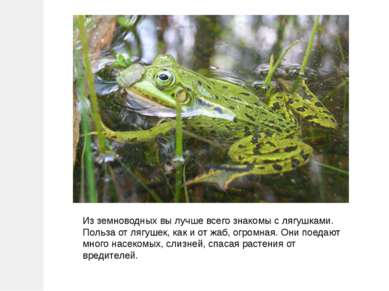 Из земноводных вы лучше всего знакомы с лягушками. Польза от лягушек, как и о...