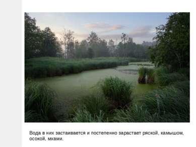 Вода в них застаивается и постепенно зарастает ряской, камышом, осокой, мхами.