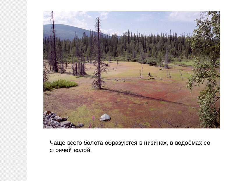 Чаще всего болота образуются в низинах, в водоёмах со стоячей водой.