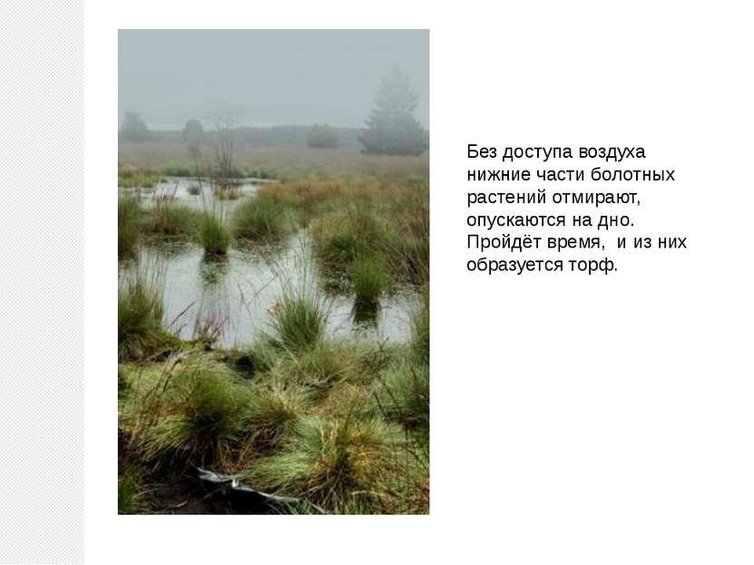 Без доступа воздуха нижние части болотных растений отмирают, опускаются на дн...