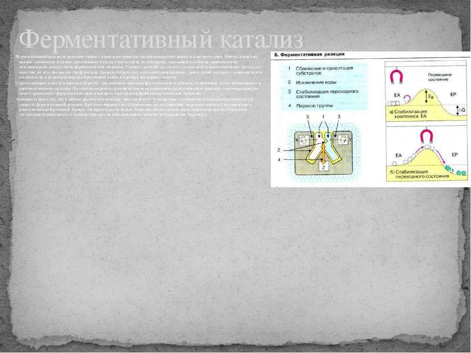 Ферментативный катализ неразрывно связан с жизнедеятельностью организмов раст...