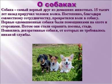 Собака – самый верный друг из домашних животных. 15 тысяч лет назад приручил ...