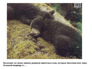 Вылезают из своих зимних домиков животные-сони, которые проспали всю зиму: бо...