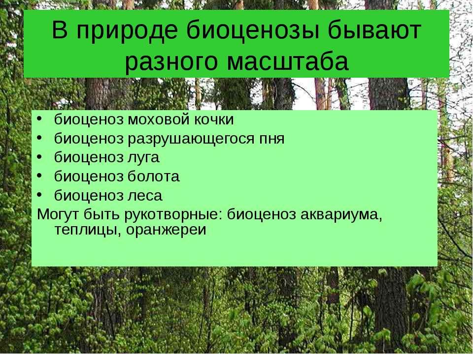 В природе биоценозы бывают разного масштаба биоценоз моховой кочки биоценоз р...