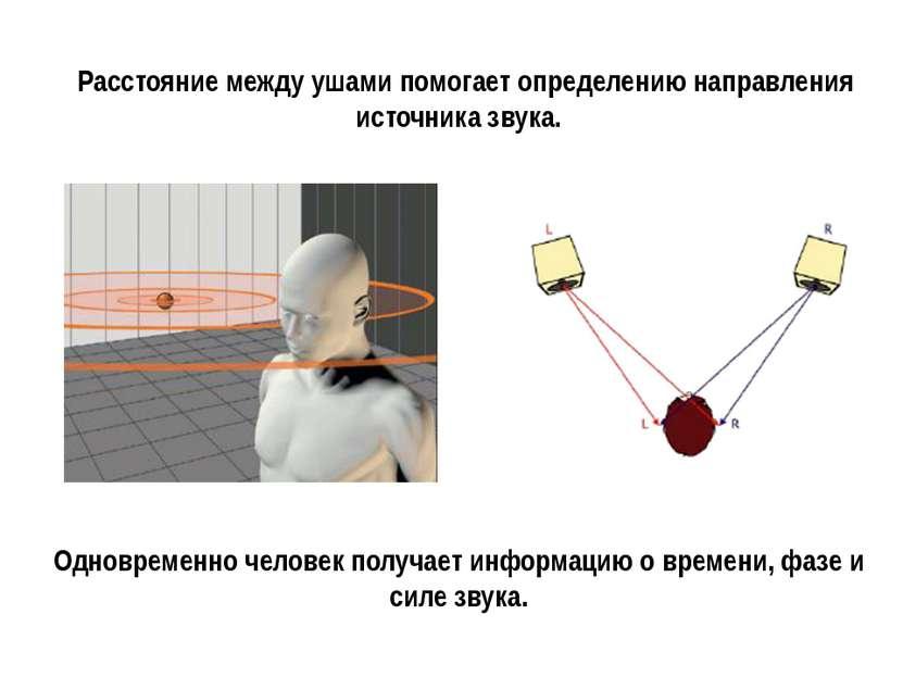 Расстояние между ушами помогает определению направления источника звука. Одно...