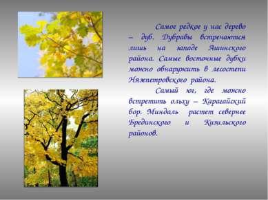 Самое редкое у нас дерево – дуб. Дубравы встречаются лишь на западе Ашинского...