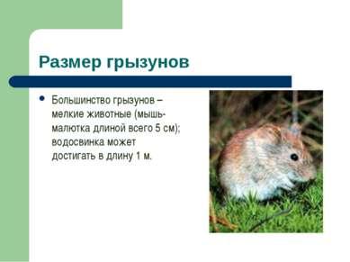 Размер грызунов Большинство грызунов – мелкие животные (мышь-малютка длиной в...