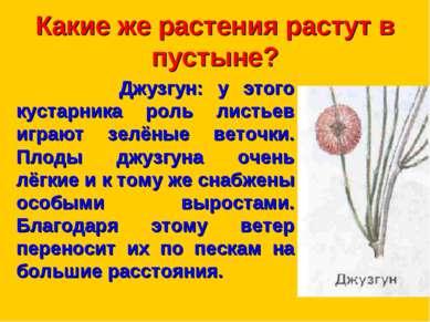 Какие же растения растут в пустыне? Джузгун: у этого кустарника роль листьев ...